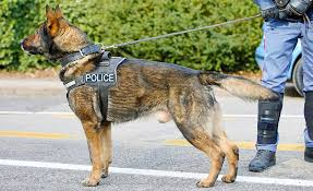 K9 Security Dog Handler